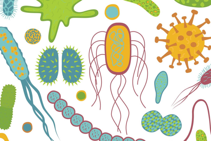 Illustration of the microbiome